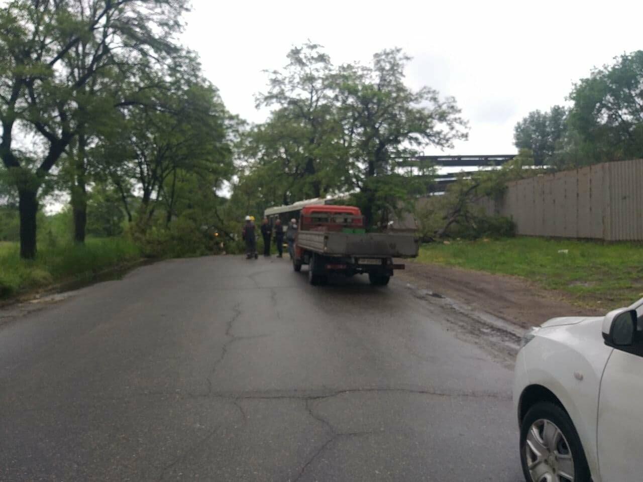 photo2021 06 0311 53 26 60b8d86b14bd9 - В Запорожье коммунальный автобус врезался в дерево: в ДТП пострадали двое человек, - ФОТО