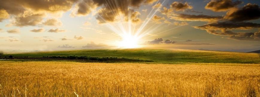 Стимуляторы роста растений и минеральные удобрения купить - цена в Украине, фото-1