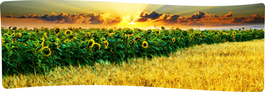 Фунгициды - средство от грибка растений (химикат) купить - цена в Украине, фото-1