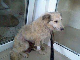 Запорожцев просят помочь в поиске собаки, - ФОТО, фото-1