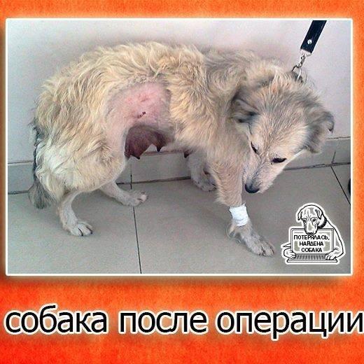 Запорожцев просят помочь в поиске собаки, - ФОТО, фото-2