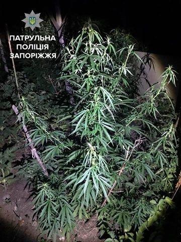 В Запорожье женщина сдала в полицию сына-наркомана, - ФОТО, фото-2