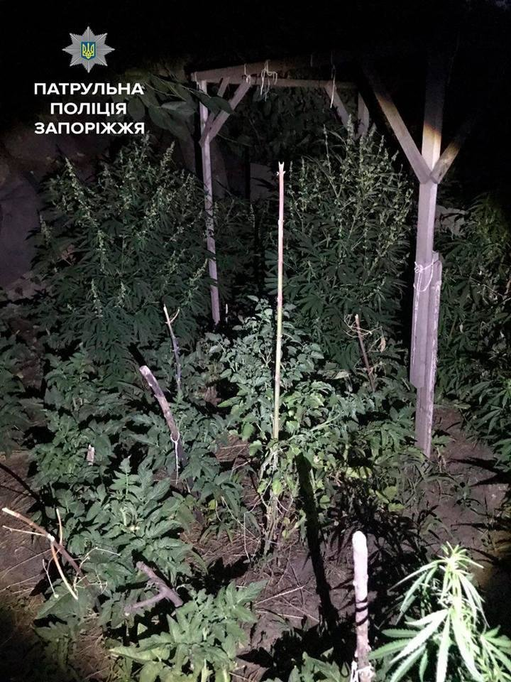 В Запорожье женщина сдала в полицию сына-наркомана, - ФОТО, фото-3