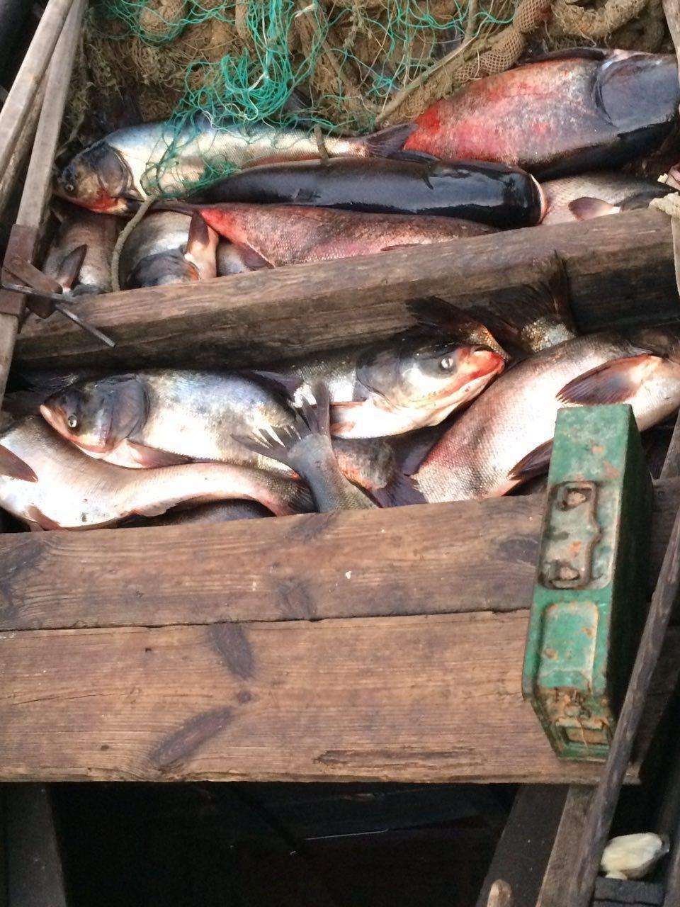 За месяц работы в Запорожье рыбоохранный патруль зафиксировал почти 300 нарушений, — ФОТО, фото-1