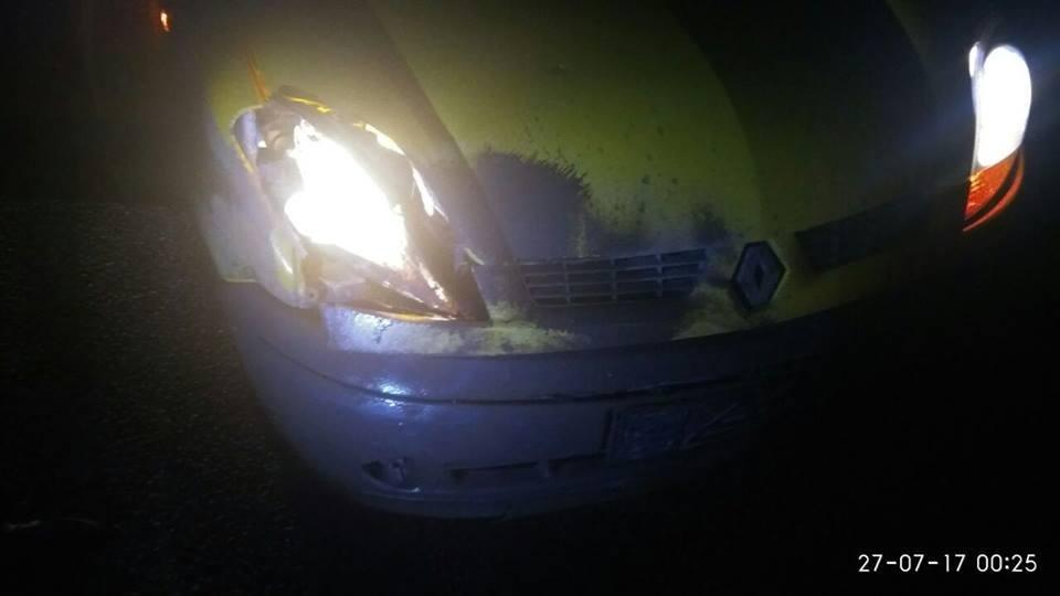 На Хортице машина сбила дикого кабана, - ФОТО, фото-1