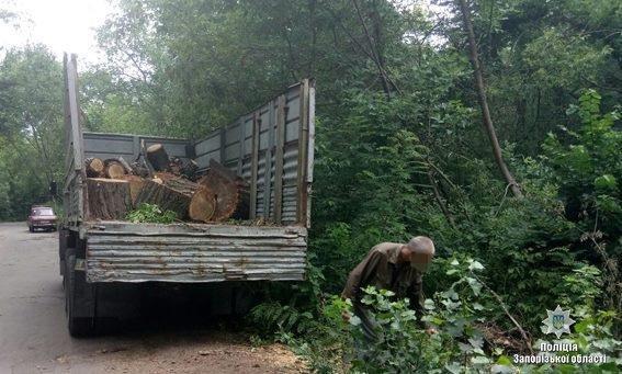 В Запорожье сотрудники лесхоза по поддельным документам вырубывали лес, - ФОТО, фото-1