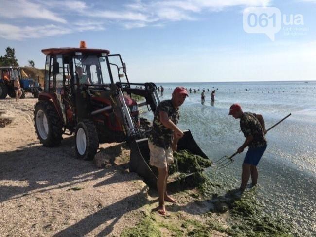 В Кирилловке рассказали, почему в море в этом году много водорослей, фото-1