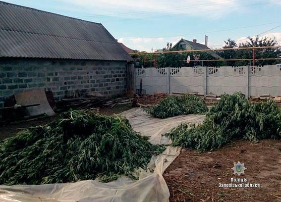 В Запорожской области у мужчины изъяли 6 килограмм наркотиков, - ФОТО, фото-1