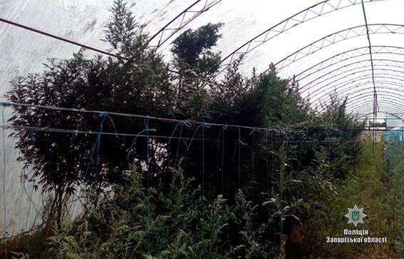 В Запорожской области у мужчины изъяли 6 килограмм наркотиков, - ФОТО, фото-2