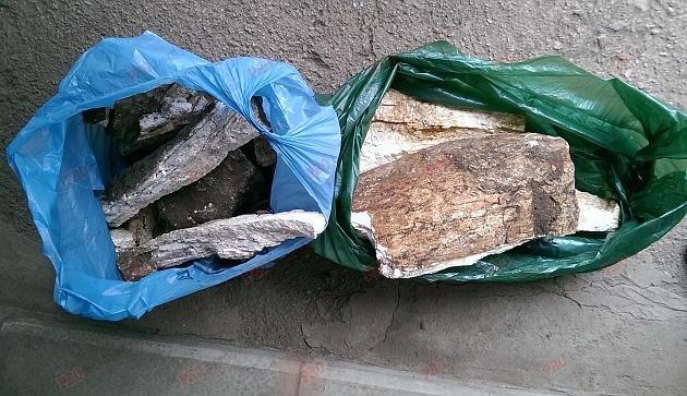 В Запорожской области строители нашли останки мамонта, - ФОТО, ВИДЕО, фото-1