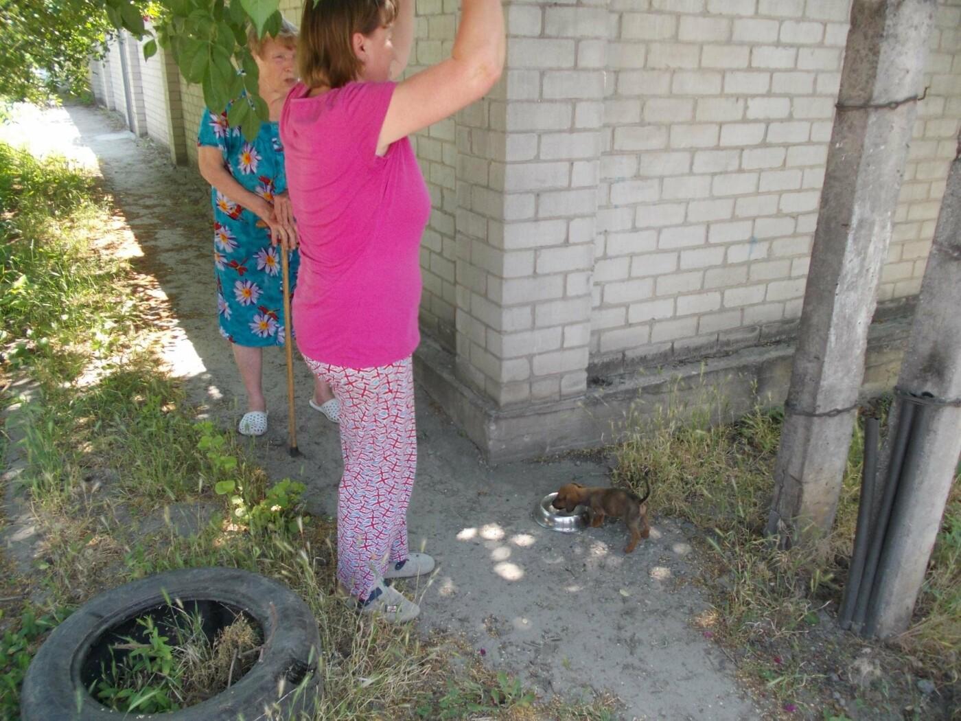 В Запорожье пожарные спасли щенка, который упал в люк, – ФОТО, фото-1