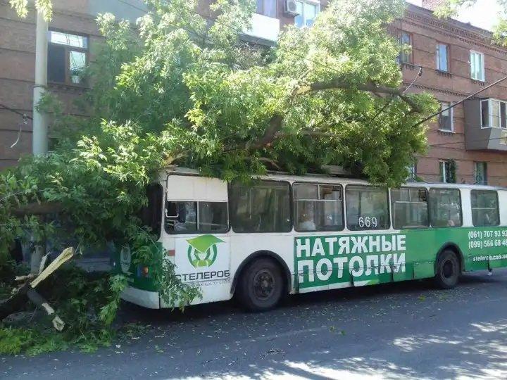 На бульваре Шевченко дерево рухнуло на троллейбус, - ФОТО, фото-1