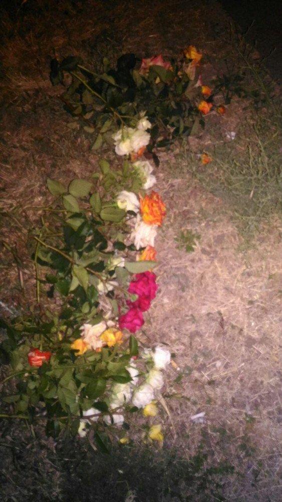 В Запорожье молодая парочка вечером воровала розы с городской клумбы, – ФОТО, фото-2