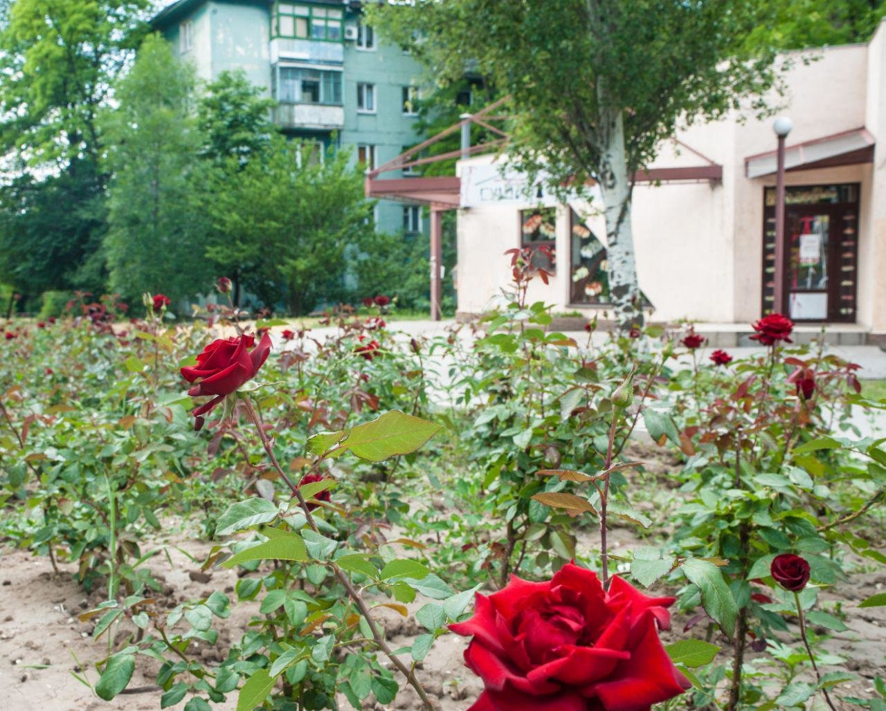 ТОП летних заведений в Запорожье, фото-85