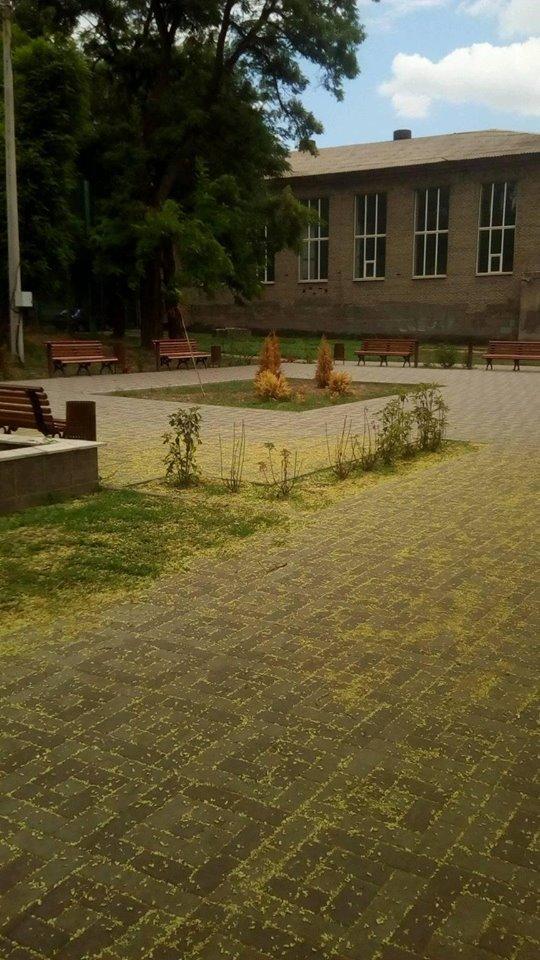Спустя полгода после открытия в новом запорожском сквере засохла вся зелень: ее забыли поливать, – ФОТО, фото-5
