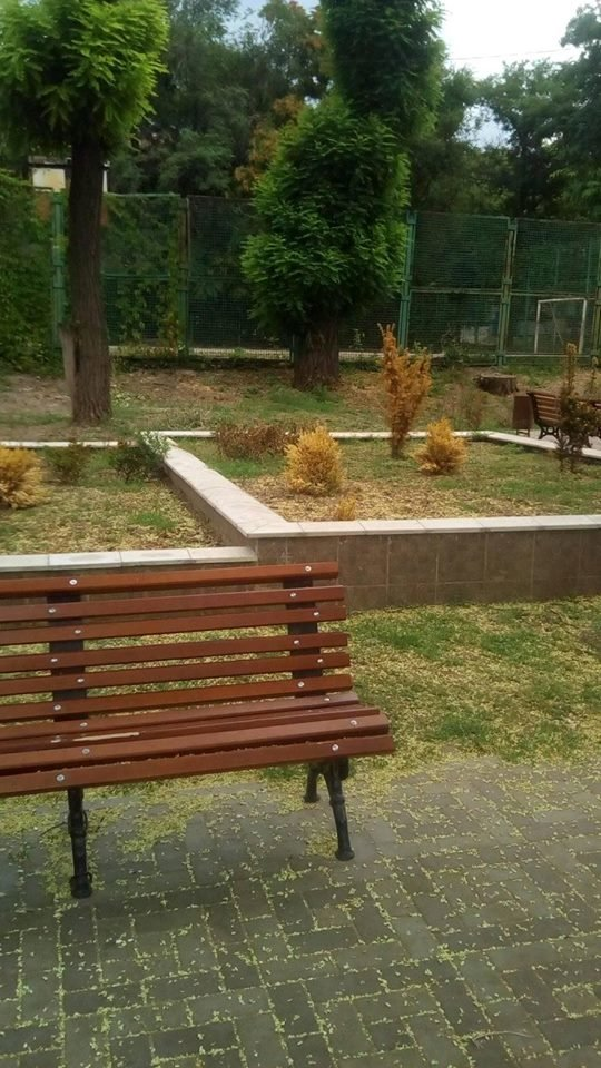 Спустя полгода после открытия в новом запорожском сквере засохла вся зелень: ее забыли поливать, – ФОТО, фото-4