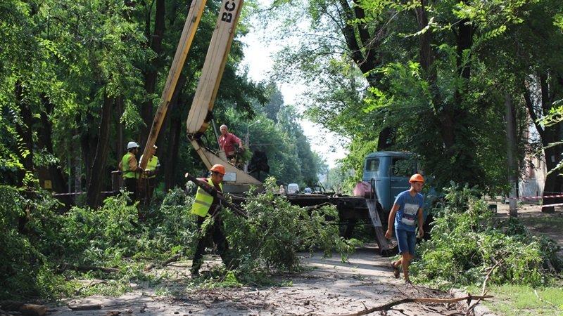 В Заводском районе Запорожья удалят 101 аварийное дерево, – ФОТО, фото-1