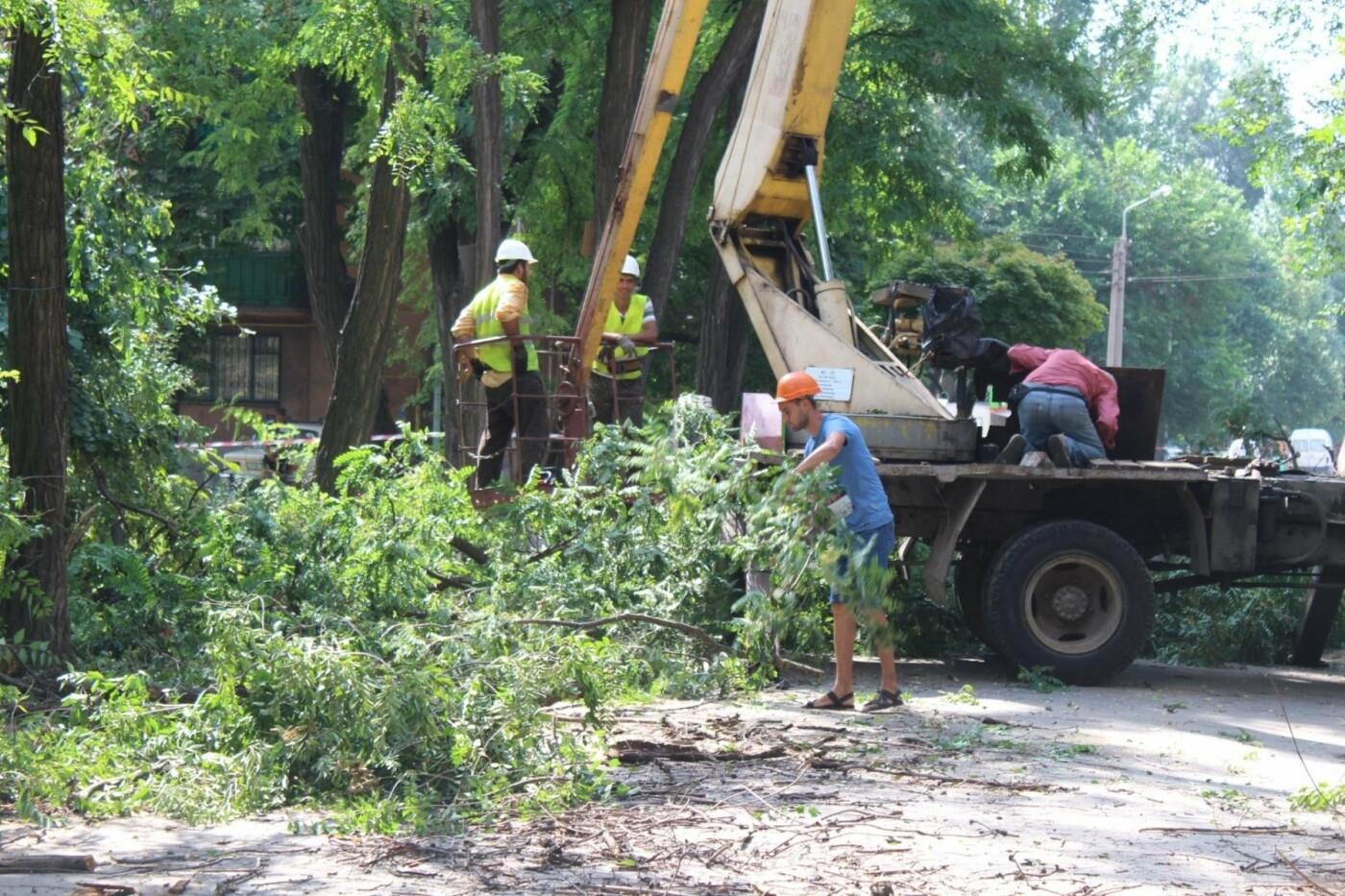 В Заводском районе Запорожья удалят 101 аварийное дерево, – ФОТО, фото-4