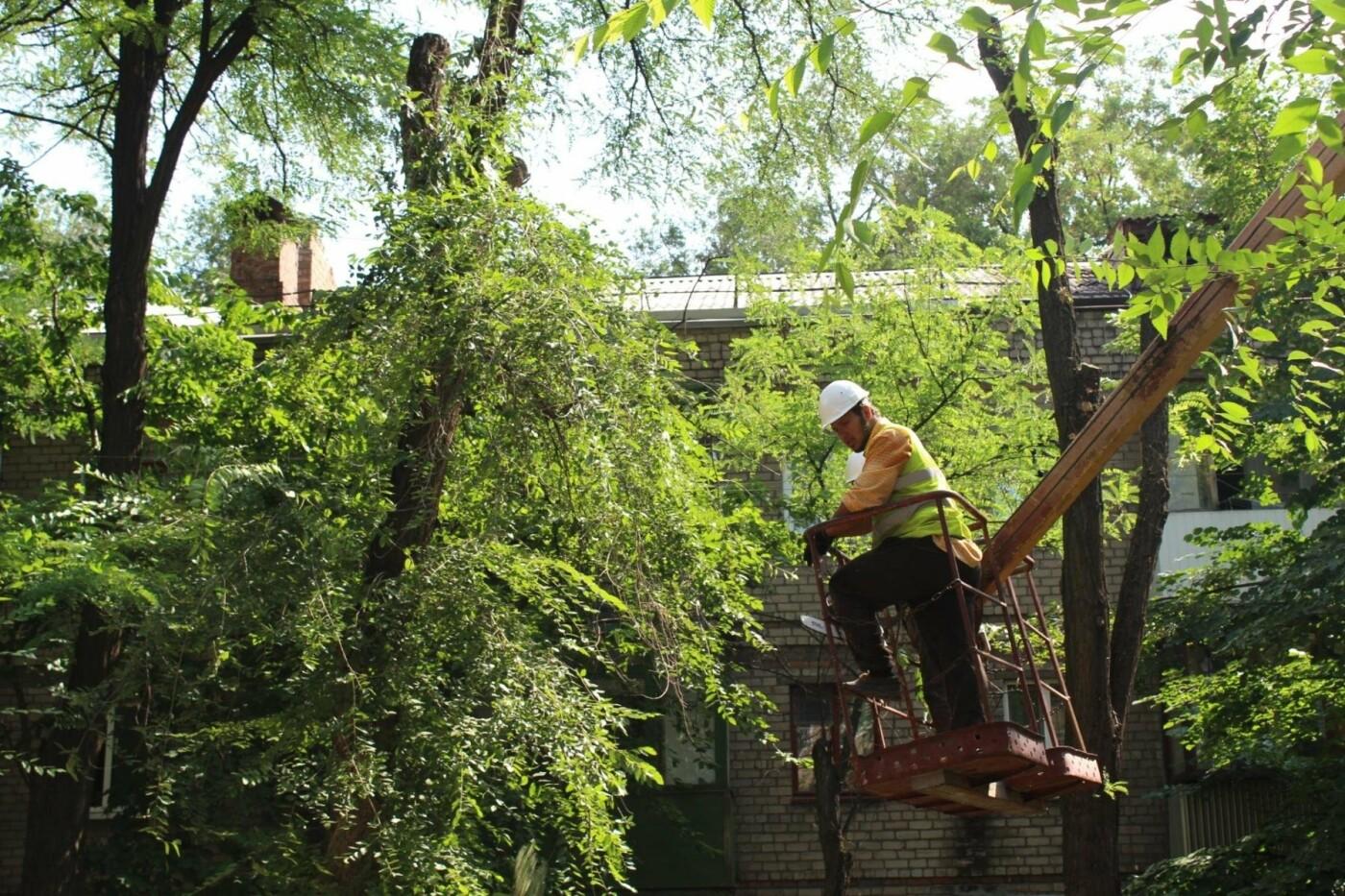 В Заводском районе Запорожья удалят 101 аварийное дерево, – ФОТО, фото-5