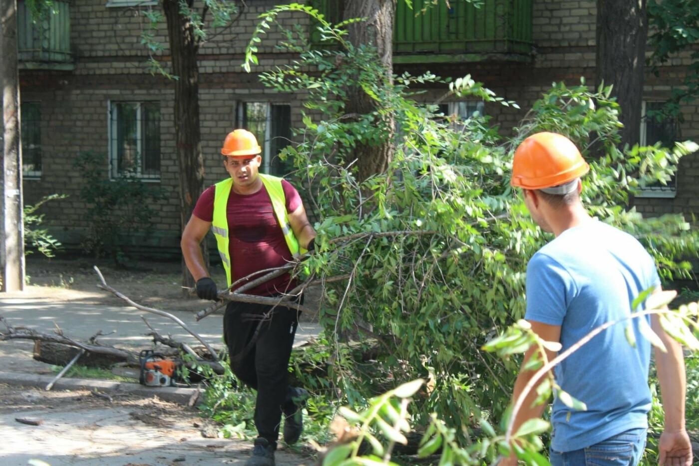 В Заводском районе Запорожья удалят 101 аварийное дерево, – ФОТО, фото-2
