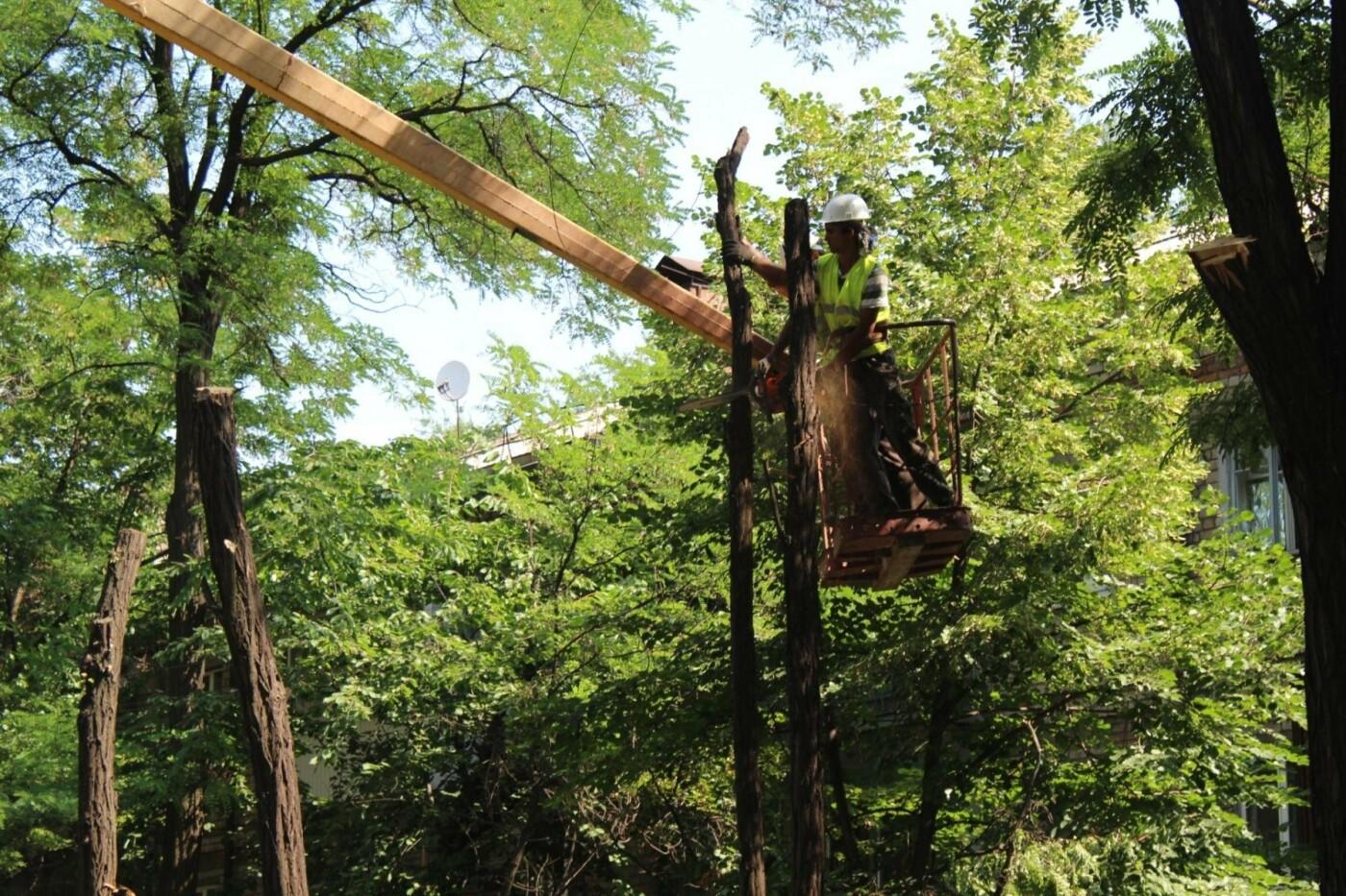 В Заводском районе Запорожья удалят 101 аварийное дерево, – ФОТО, фото-6