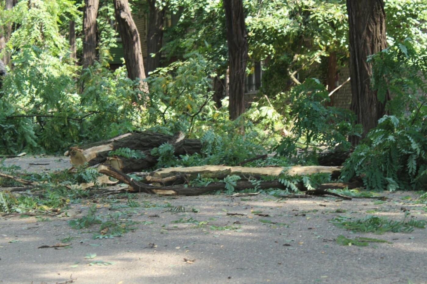 В Заводском районе Запорожья удалят 101 аварийное дерево, – ФОТО, фото-3