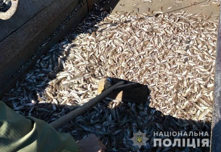 В Запорожской области браконьеры незаконно выловили более 200 кг рыбы-молодняка, – ФОТО, фото-2