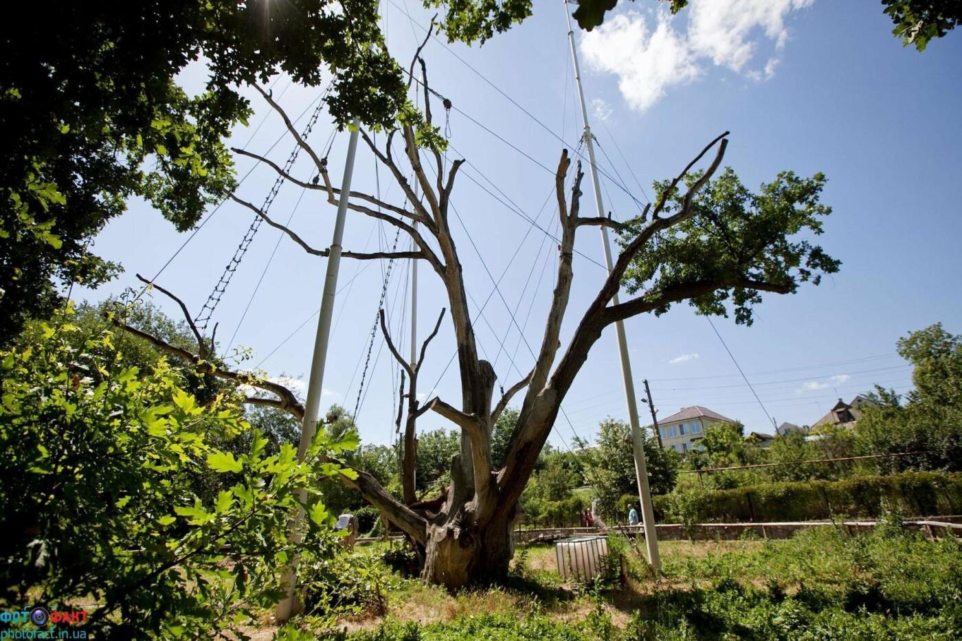 Опасен для граждан: Запорожский дуб перед сносом лишат статуса ботанической памятки, фото-2
