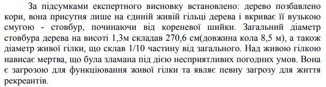 Опасен для граждан: Запорожский дуб перед сносом лишат статуса ботанической памятки, фото-1