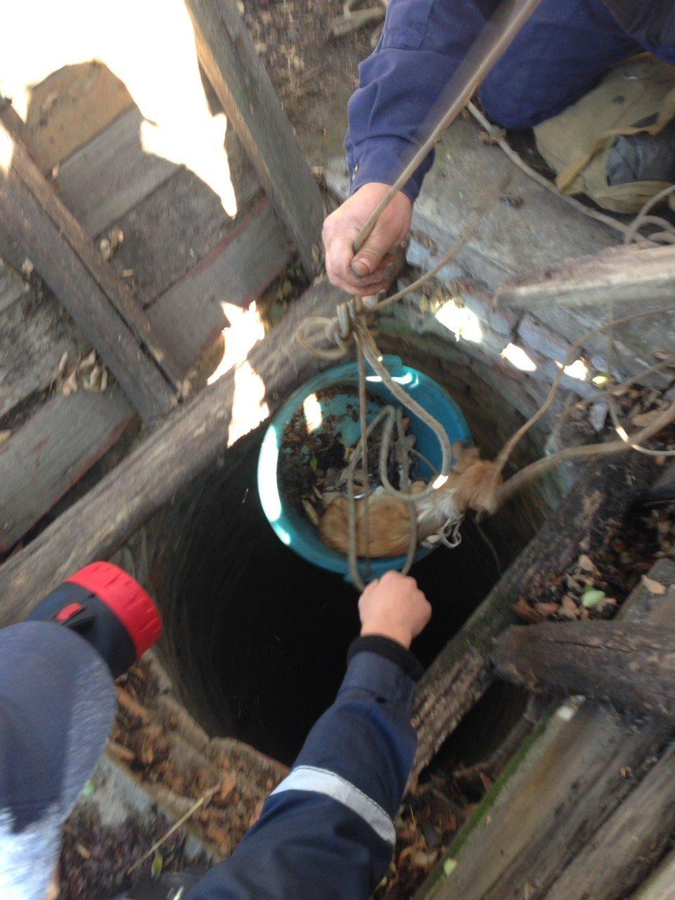 Запорожские спасатели вытащили упавшего щенка из 15-метрового колодца, – ФОТО, фото-1