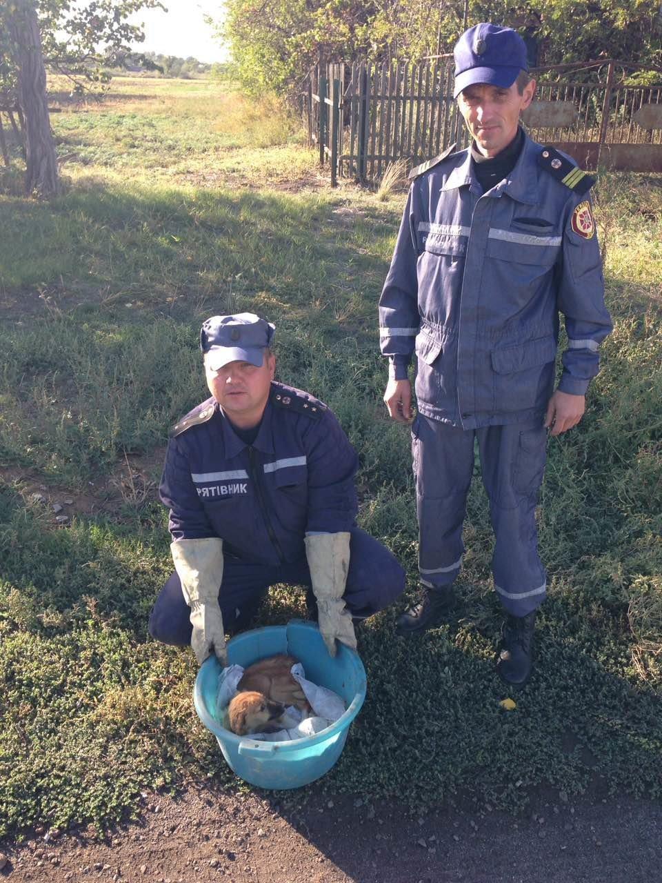 Запорожские спасатели вытащили упавшего щенка из 15-метрового колодца, – ФОТО, фото-2