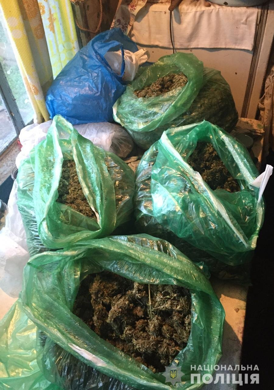 В Запорожской области обнаружили теплицу с наркотиками (ФОТО)
