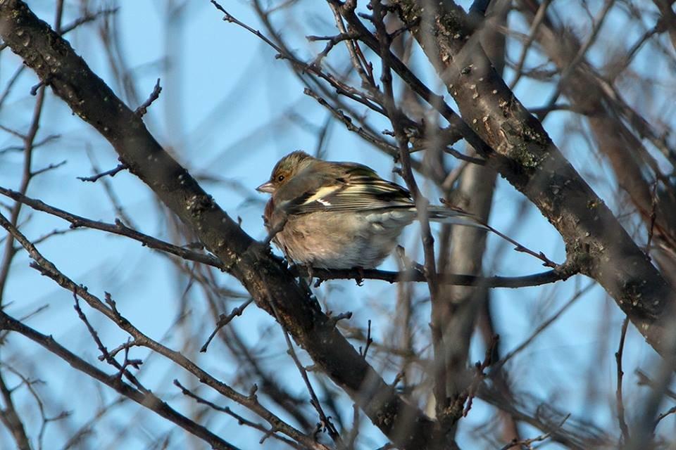 Дикие кабаны, олени и птицы: запорожский натуралист опубликовал снимки зимней Хортицы, – ФОТО, фото-14