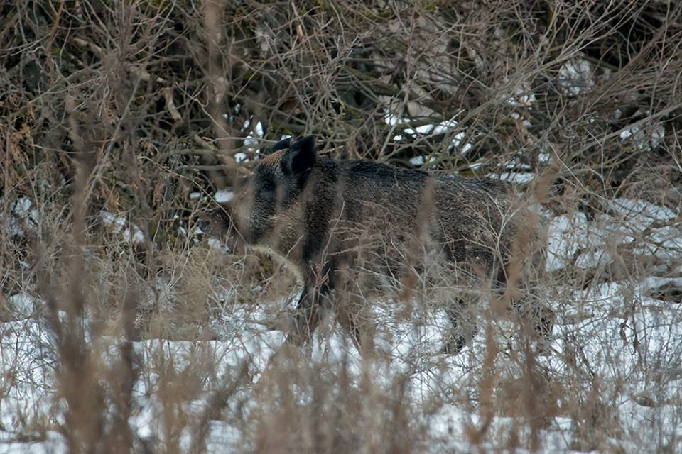 Дикие кабаны, олени и птицы: запорожский натуралист опубликовал снимки зимней Хортицы, – ФОТО, фото-13