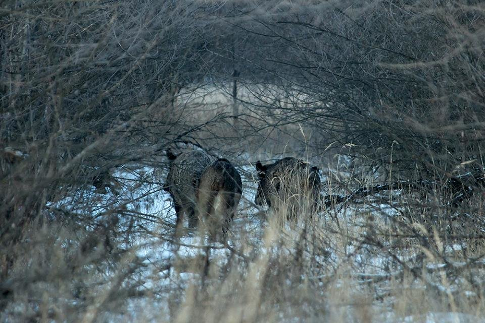 Дикие кабаны, олени и птицы: запорожский натуралист опубликовал снимки зимней Хортицы, – ФОТО, фото-11