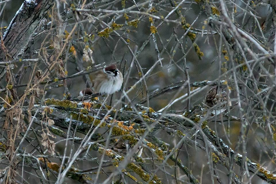 Дикие кабаны, олени и птицы: запорожский натуралист опубликовал снимки зимней Хортицы, – ФОТО, фото-16