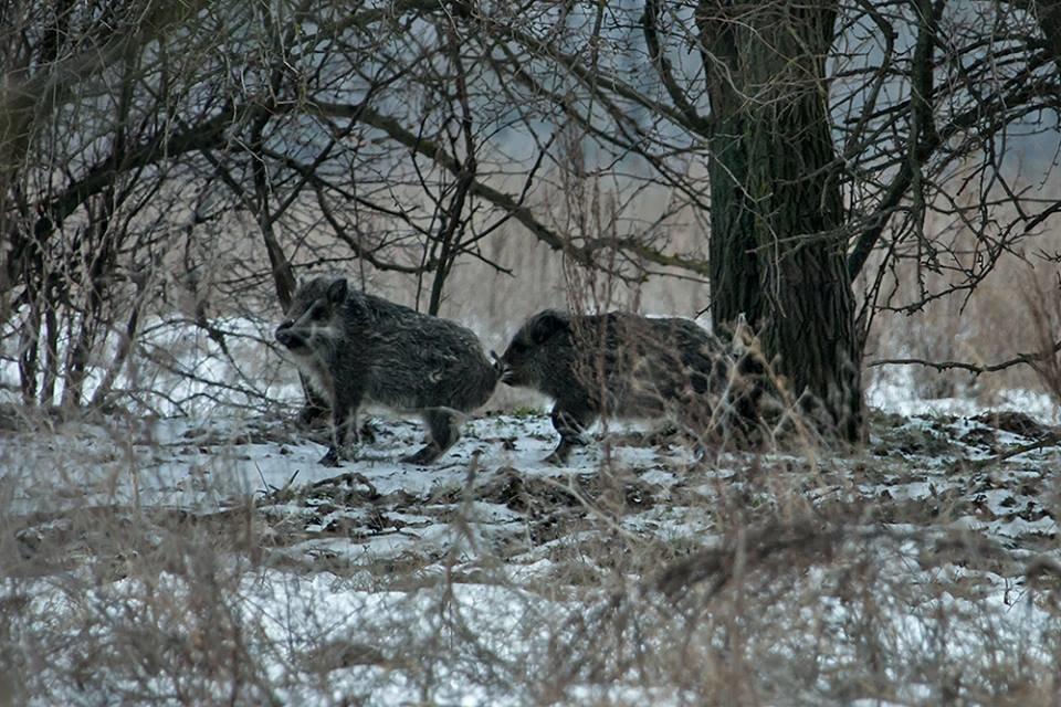 Дикие кабаны, олени и птицы: запорожский натуралист опубликовал снимки зимней Хортицы, – ФОТО, фото-12