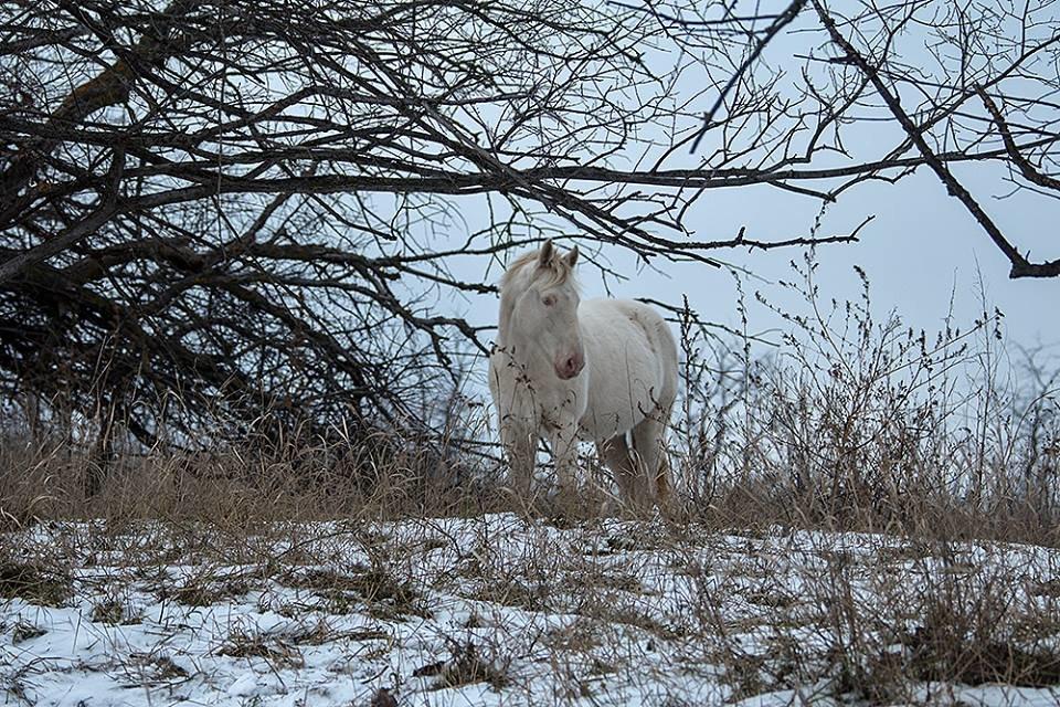 Дикие кабаны, олени и птицы: запорожский натуралист опубликовал снимки зимней Хортицы, – ФОТО, фото-4