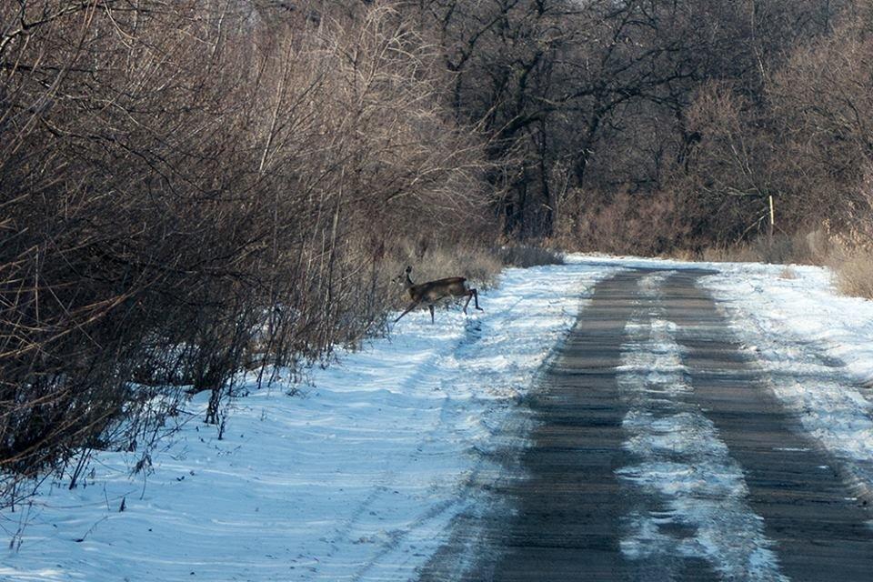 Дикие кабаны, олени и птицы: запорожский натуралист опубликовал снимки зимней Хортицы, – ФОТО, фото-7