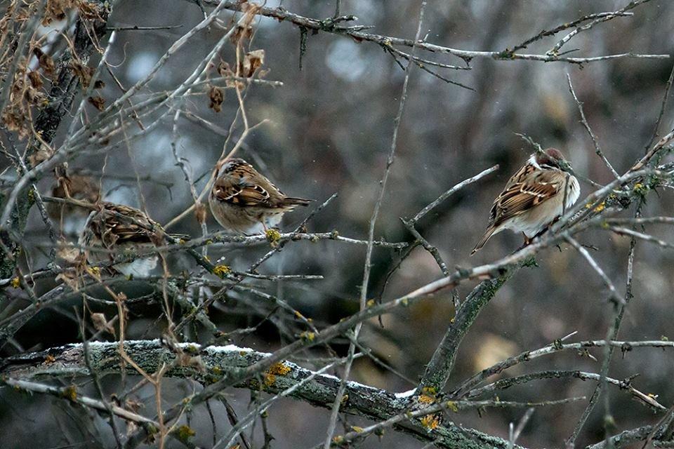 Дикие кабаны, олени и птицы: запорожский натуралист опубликовал снимки зимней Хортицы, – ФОТО, фото-15