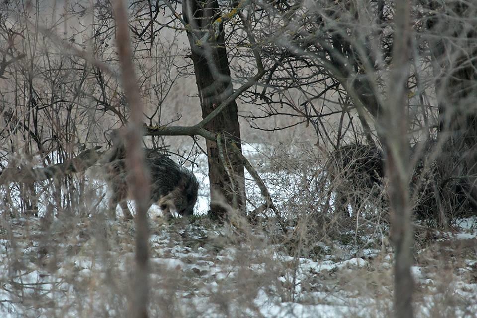 Дикие кабаны, олени и птицы: запорожский натуралист опубликовал снимки зимней Хортицы, – ФОТО, фото-10