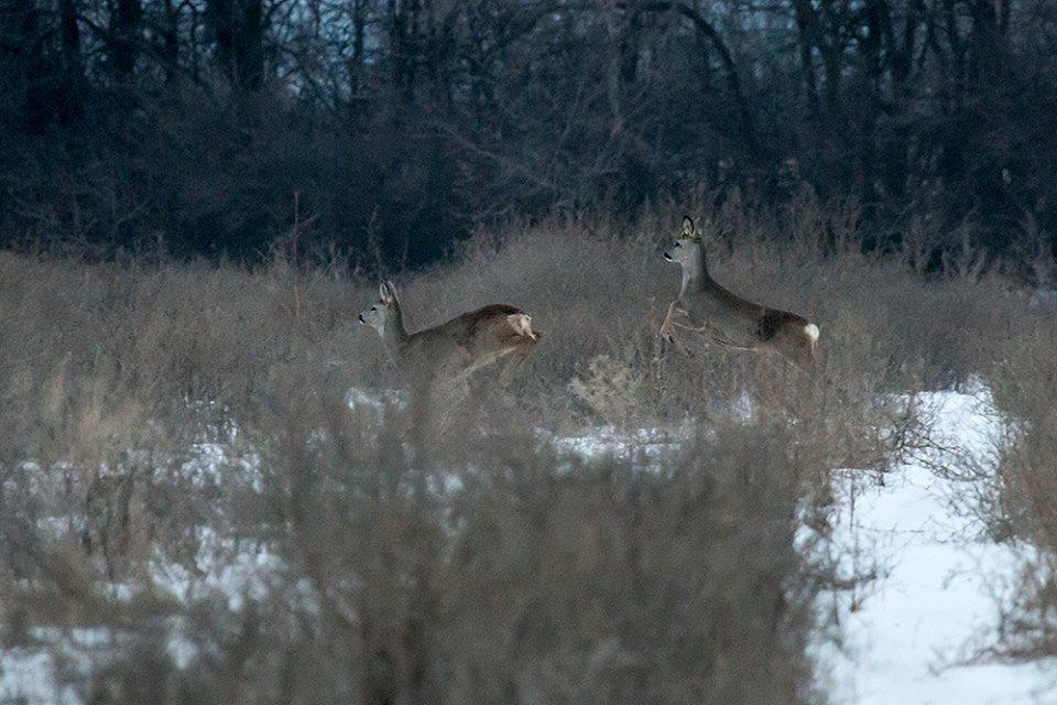 Дикие кабаны, олени и птицы: запорожский натуралист опубликовал снимки зимней Хортицы, – ФОТО, фото-6