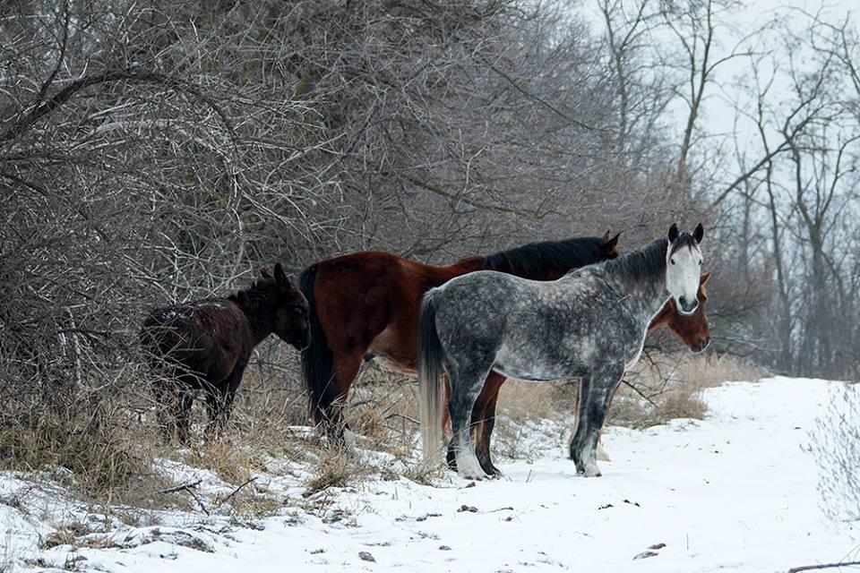 Дикие кабаны, олени и птицы: запорожский натуралист опубликовал снимки зимней Хортицы, – ФОТО, фото-1
