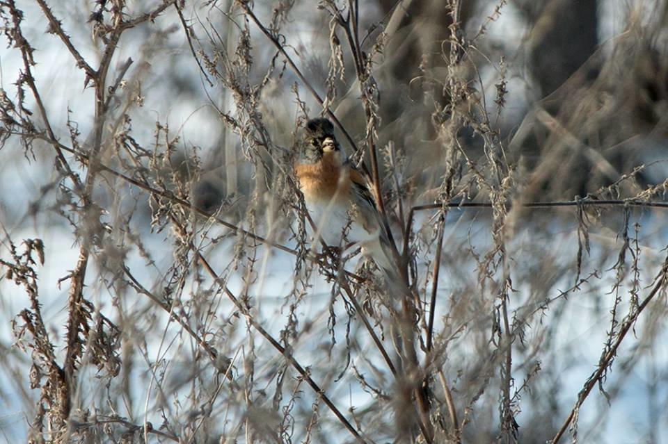 Дикие кабаны, олени и птицы: запорожский натуралист опубликовал снимки зимней Хортицы, – ФОТО, фото-17