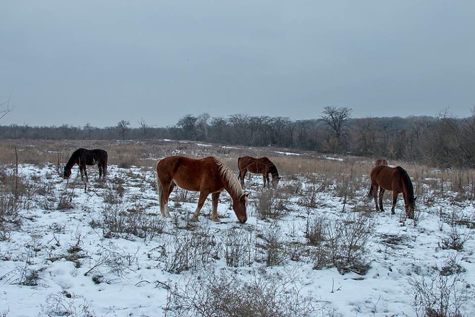 Дикие кабаны, олени и птицы: запорожский натуралист опубликовал снимки зимней Хортицы, – ФОТО, фото-3