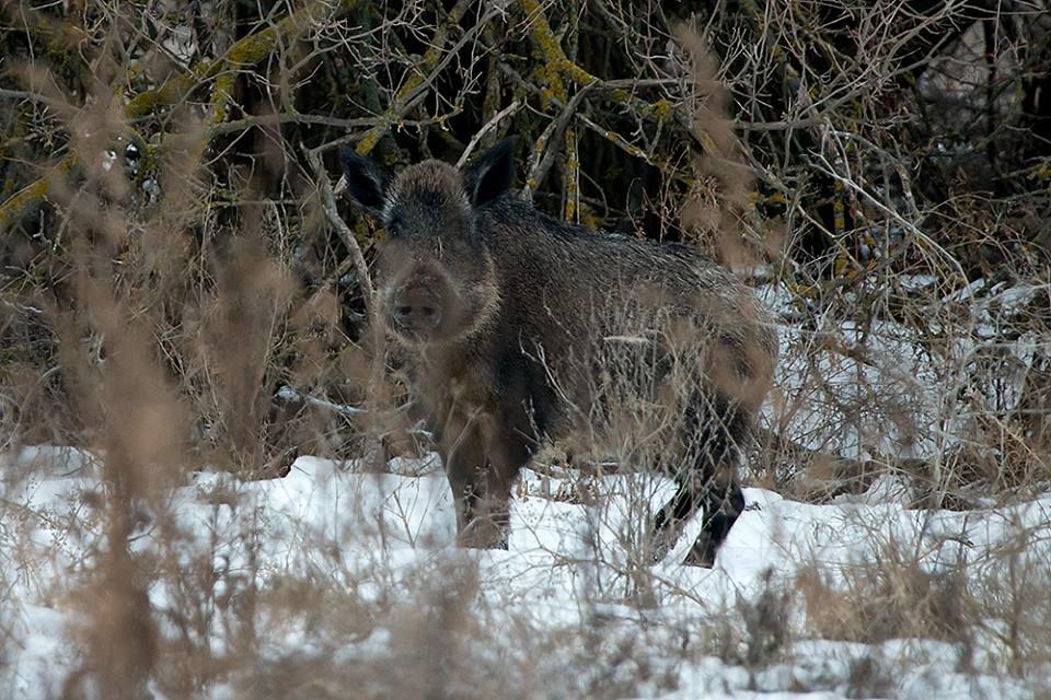 Дикие кабаны, олени и птицы: запорожский натуралист опубликовал снимки зимней Хортицы, – ФОТО, фото-8