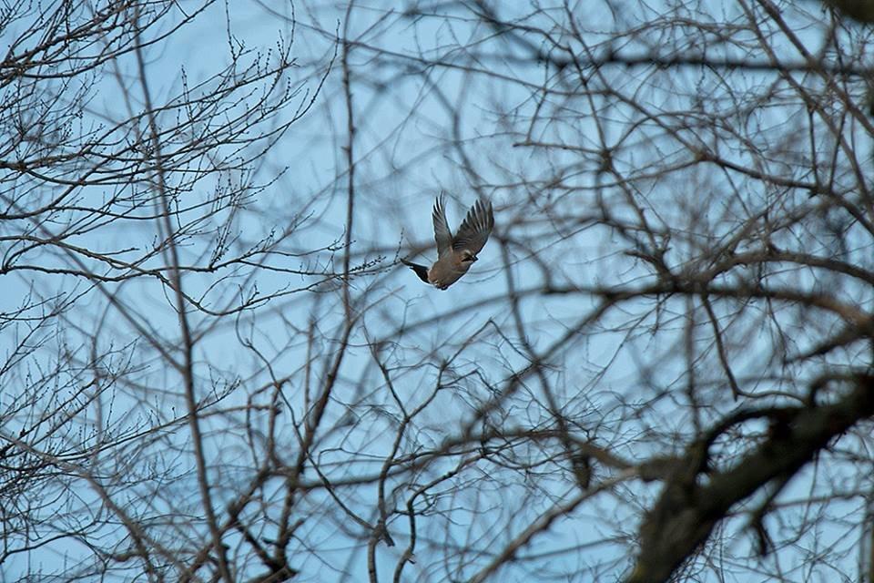 Дикие кабаны, олени и птицы: запорожский натуралист опубликовал снимки зимней Хортицы, – ФОТО, фото-24