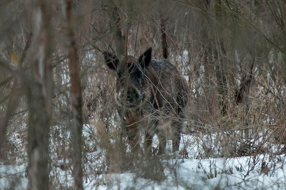 Дикие кабаны, олени и птицы: запорожский натуралист опубликовал снимки зимней Хортицы, – ФОТО, фото-9