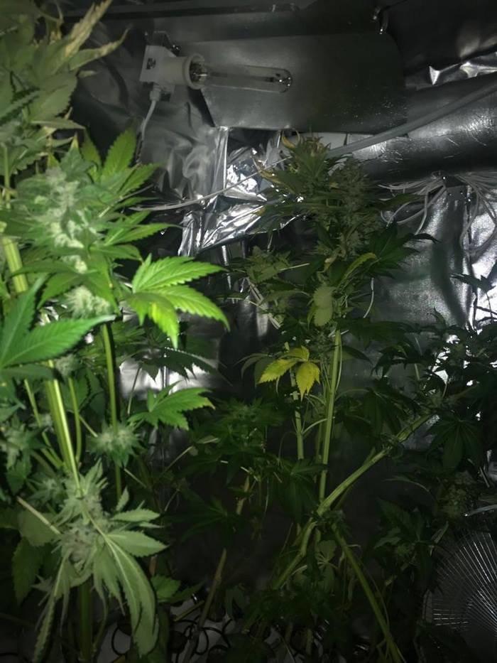 В Запорожье изъяли марихуаны на 3 миллиона, - ФОТО, фото-4