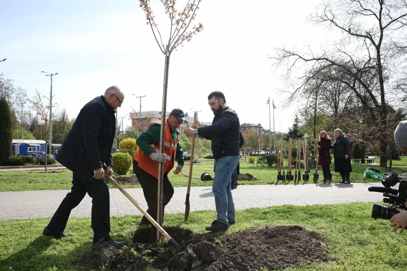 В запорожском парке высадили аллею японских сакур, – ФОТО